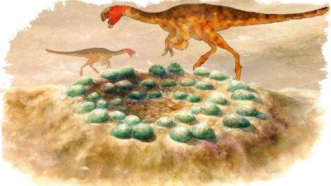 Reconstruction oviraptors
